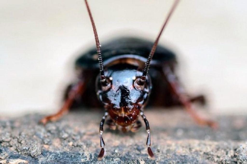 Чёрные канализационные тараканы Кто такие канализационные тараканы