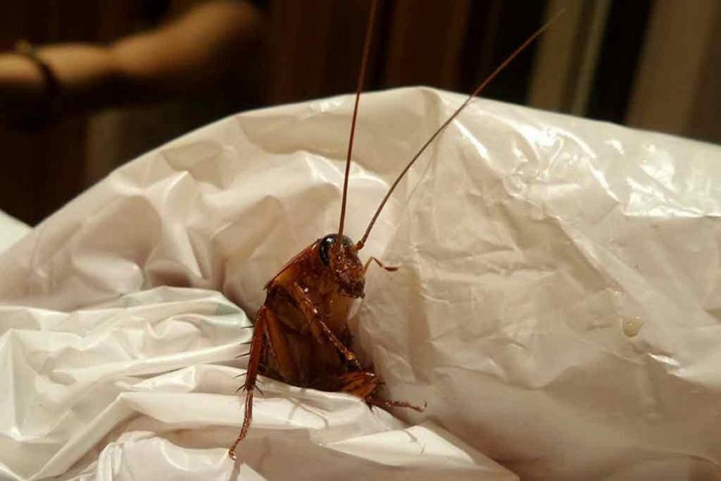 3 лучших средства с полынью – как избавиться от тараканов в квартире. Отзывы покупателей об использовании, механизм действия