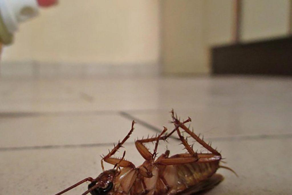 Чистый дом от тараканов – обзор средств (гели, аэрозоли, спреи, ловушки), отзывы покупателей об использовании, особенности действия