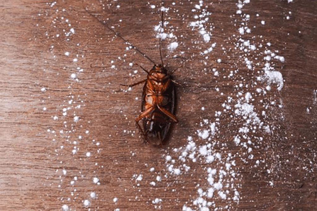 Чистый дом от тараканов – обзор средств (гели, аэрозоли, спреи, ловушки), отзывы покупателей об использовании, применение дуста