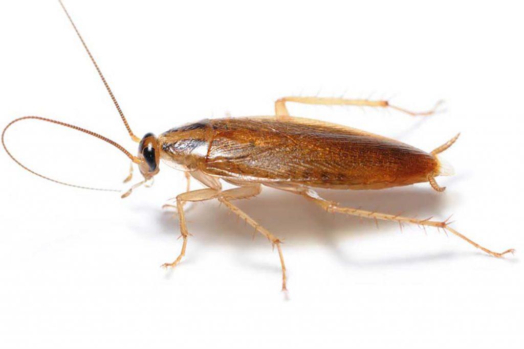 Что делать, если тараканы завелись в микроволновке – пошаговый алгоритм обработки бытовой техники, прусак