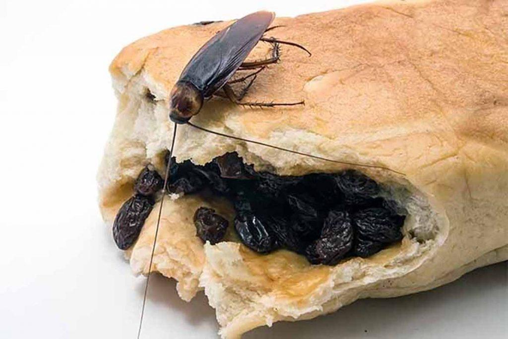 Что делать, если тараканы завелись в микроволновке – пошаговый алгоритм обработки бытовой техники, заражение продуктов