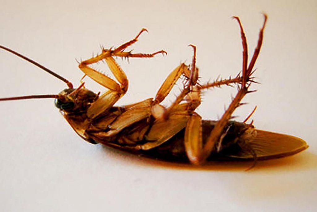 Что делать, если тараканы завелись в микроволновке – пошаговый алгоритм обработки бытовой техники, свет