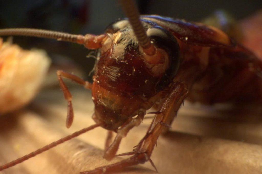 Что делать, если в машине завелись тараканы – как вывести и избавиться от них навсегда, талисман