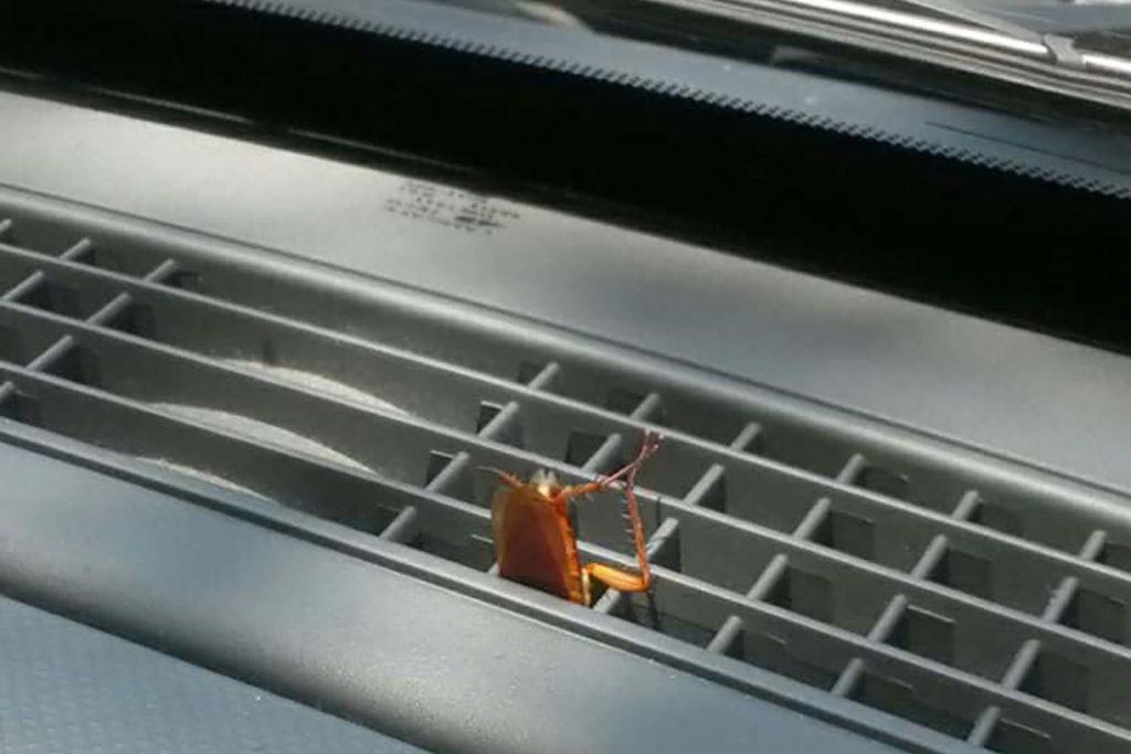 Что делать, если в машине завелись тараканы – как вывести и избавиться от них навсегда, редкое явление