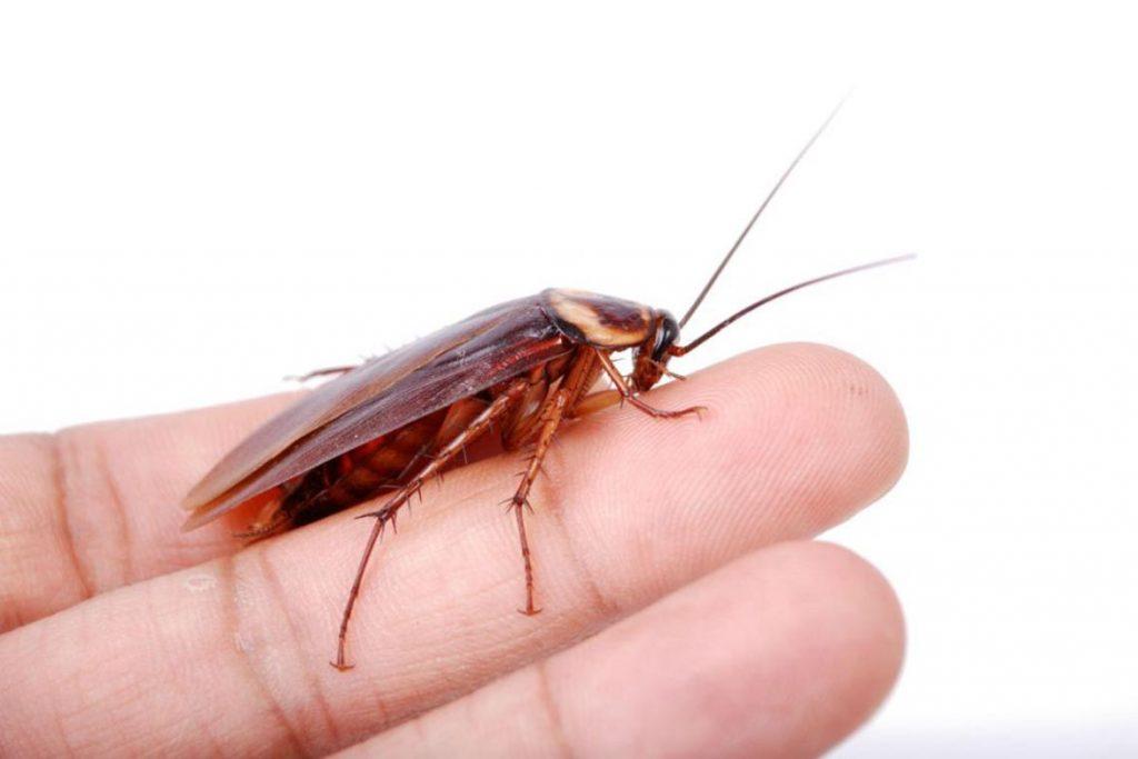 Что делать, если в машине завелись тараканы – как вывести и избавиться от них навсегда, вид вредителей