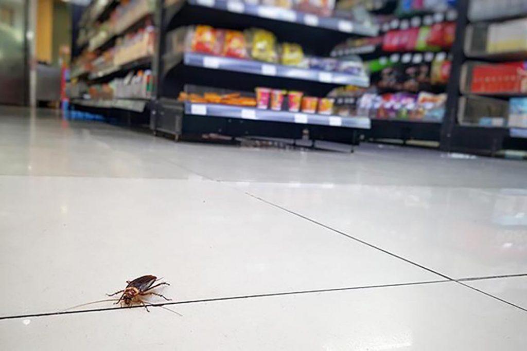 Что делать, если в машине завелись тараканы – как вывести и избавиться от них навсегда, пути заражения