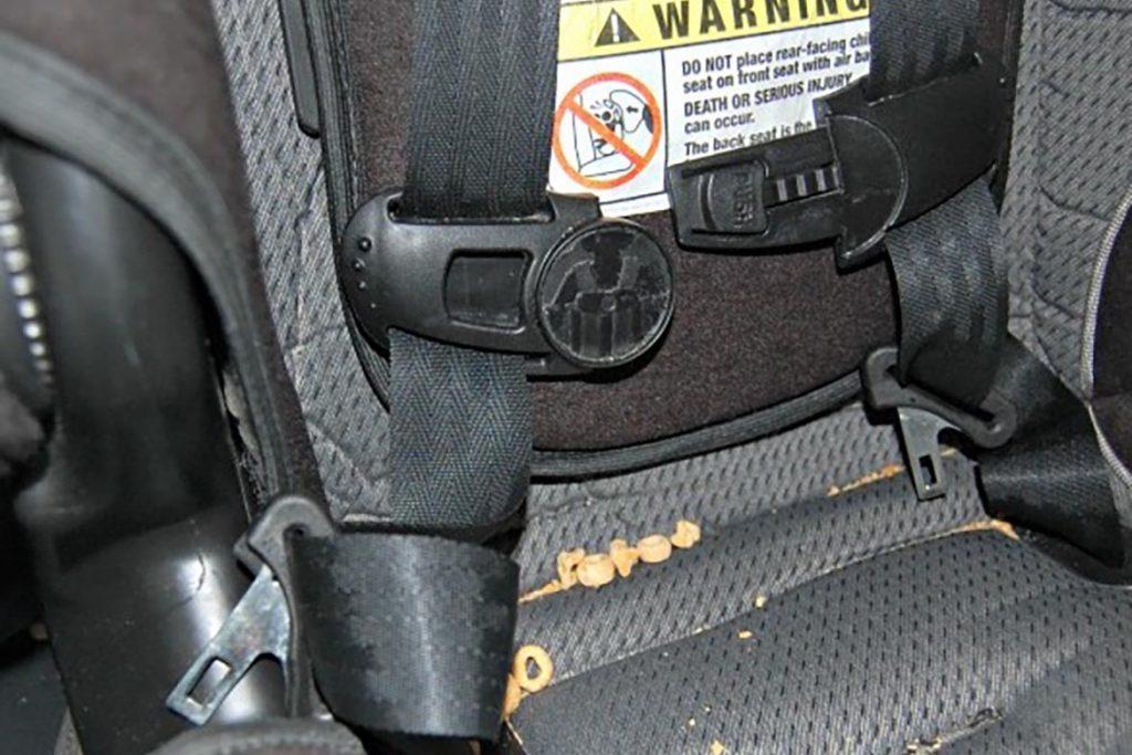 Что делать, если в машине завелись тараканы – как вывести и избавиться от них навсегда, крошки пищи