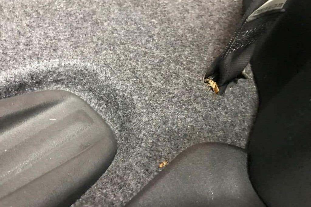 Что делать, если в машине завелись тараканы – как вывести и избавиться от них навсегда, укромные места