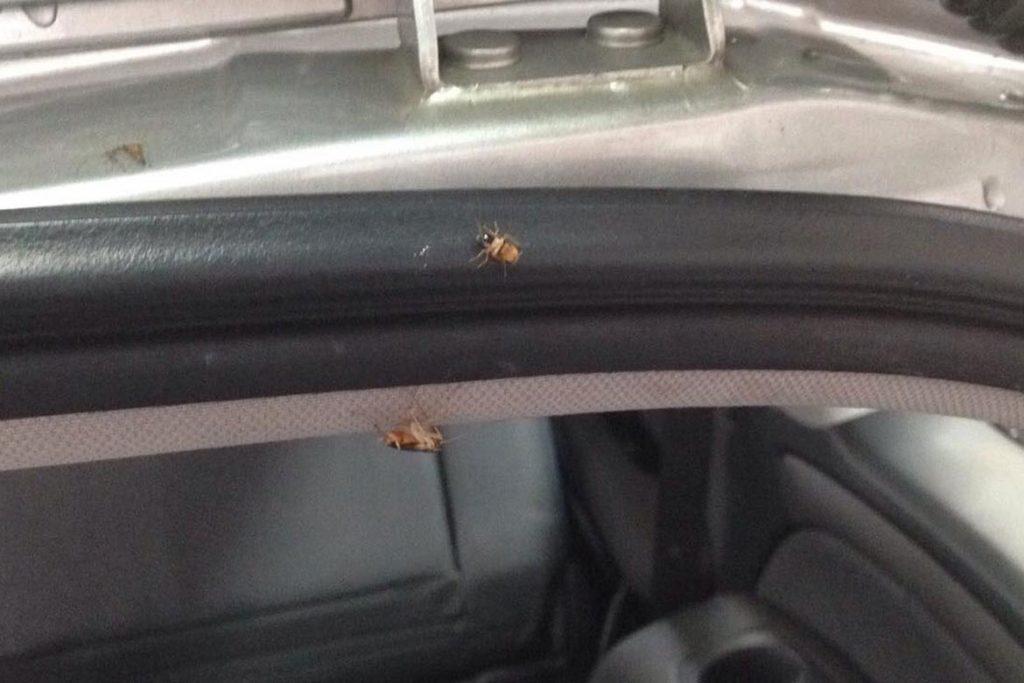 Что делать, если в машине завелись тараканы – как вывести и избавиться от них навсегда, сложности в обнаружении