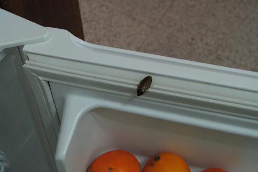Что делать и как избавиться, если тараканы живут в холодильнике – пошаговая инструкция, как вывести насекомых из бытовой техники. Профилактика, как попадают