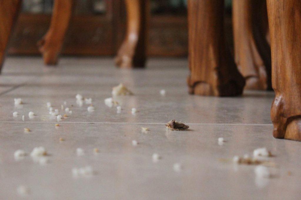 Что делать и как избавиться, если тараканы живут в холодильнике – пошаговая инструкция, как вывести насекомых из бытовой техники. Профилактика, регулярная уборка