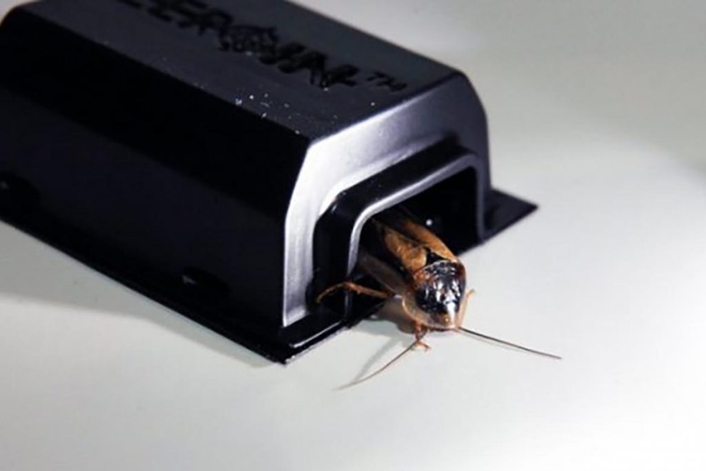 Что делать и как избавиться, если тараканы живут в холодильнике – пошаговая инструкция, как вывести насекомых из бытовой техники. Профилактика, установка ловушек