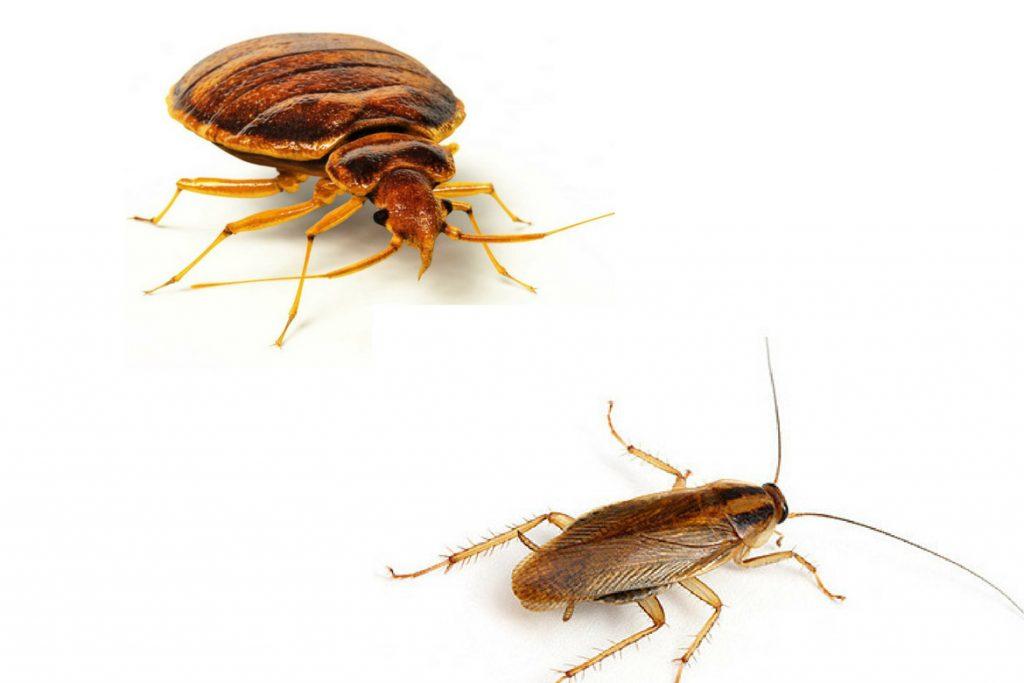 Едят ли тараканы клопов и их яйца таракан и клоп