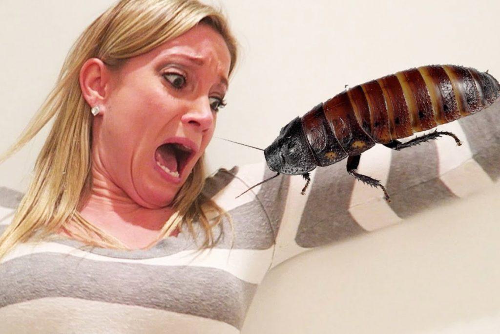 Если случайно съел таракана проглотить