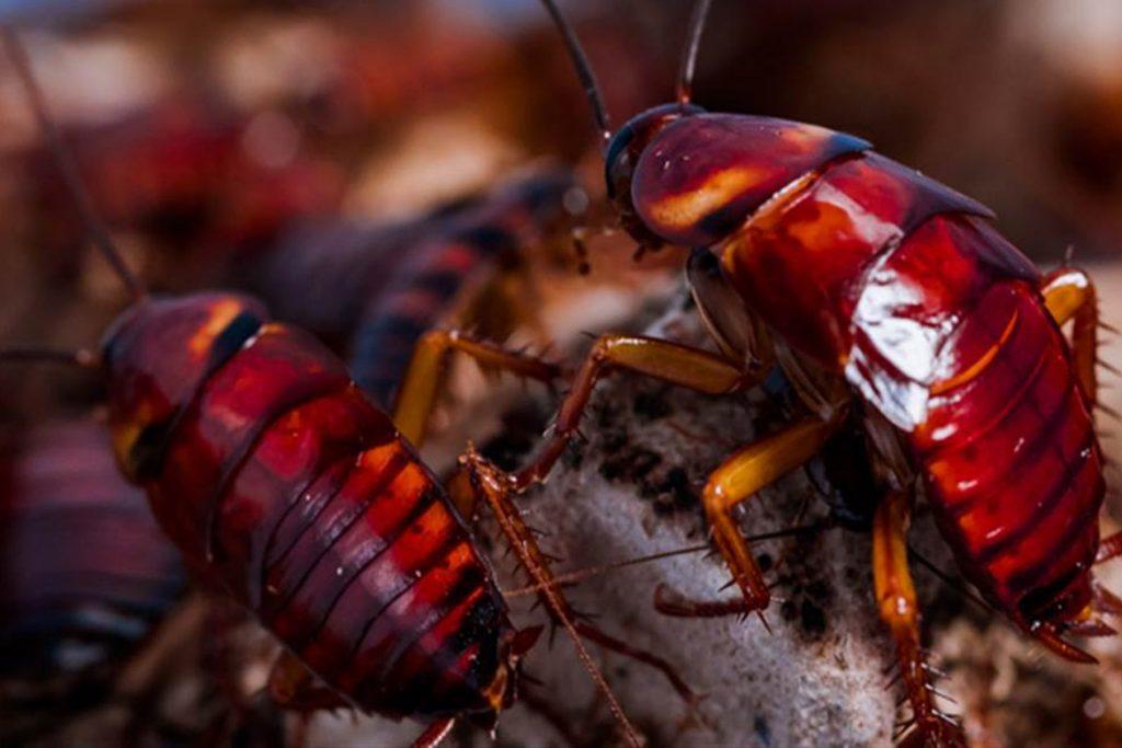 Естественные враги тараканов виды вредителей