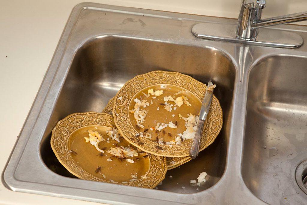 Как избавиться от тараканов в общежитии масштабы заражения помещения, важность профессиональной дезинсекции и профилактики заражения каждой комнаты, грязная посуда