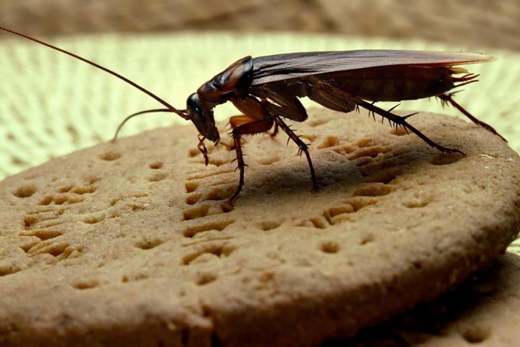 Как избавиться от тараканов в общежитии масштабы заражения помещения, важность профессиональной дезинсекции и профилактики заражения каждой комнаты