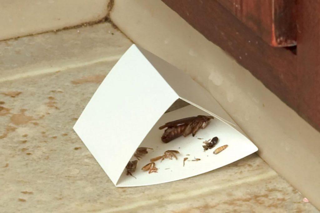 Как избавиться от тараканов в общежитии масштабы заражения помещения, важность профессиональной дезинсекции и профилактики заражения каждой комнаты. самодельные ловушки