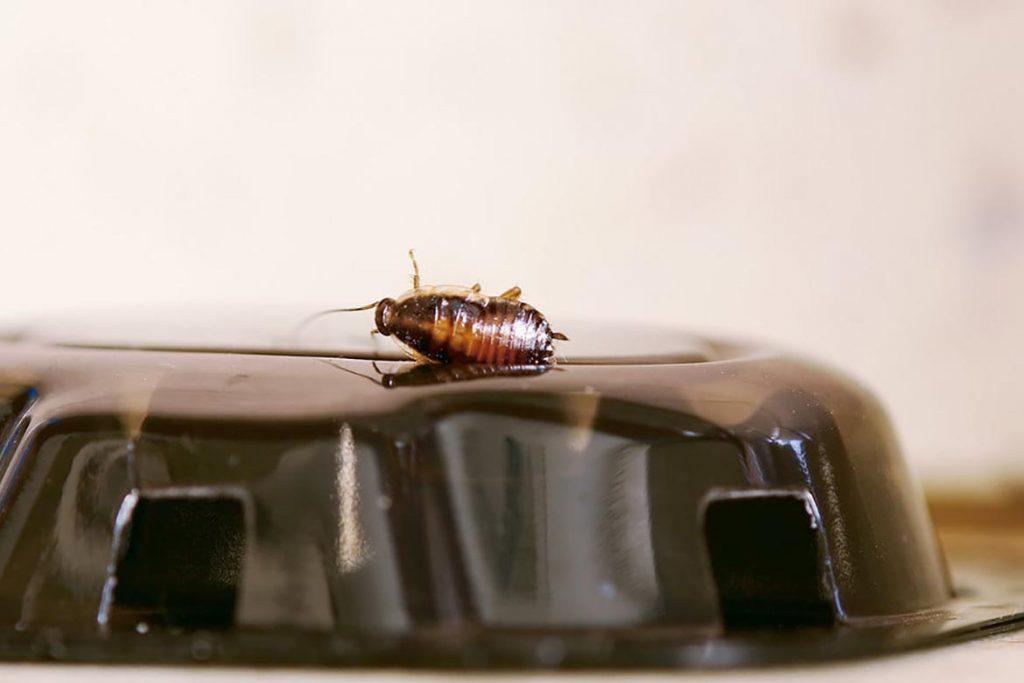Как избавиться от тараканов в общежитии масштабы заражения помещения, важность профессиональной дезинсекции и профилактики заражения каждой комнаты, ловушки для профилактики