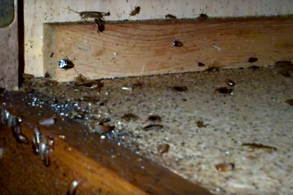Как выглядят маленькие тараканы в квартире на кухне