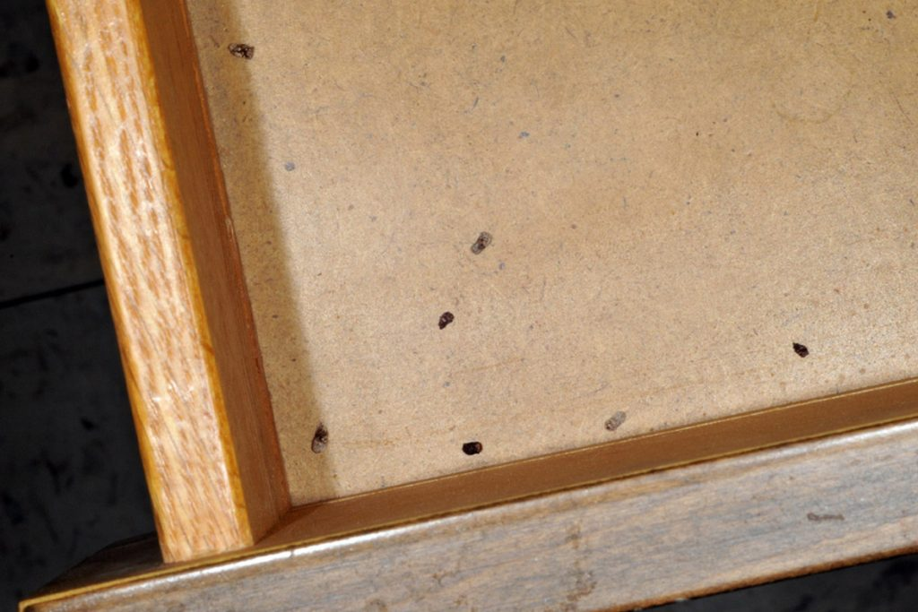 Какашки тараканов внешний вид