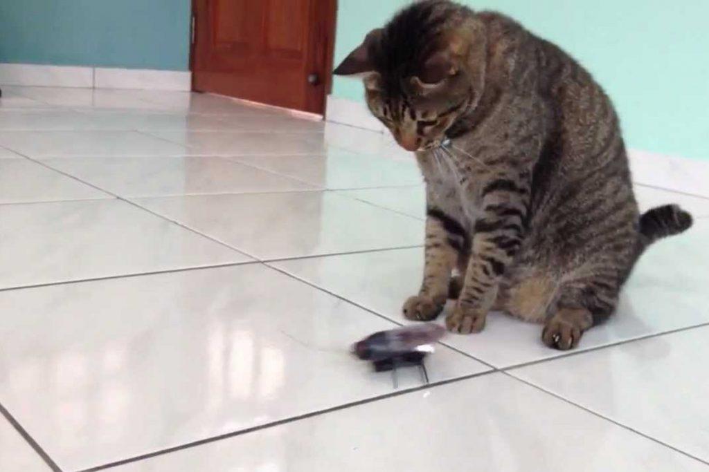 Кот съел таракана охота