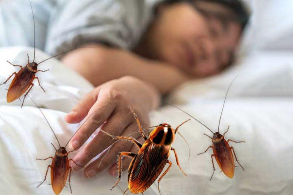 Кусаются ли тараканы или нет кусаются или нет