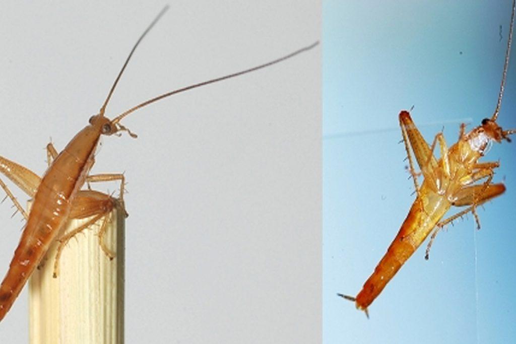 Летают ли тараканы или нет могут прыгать или нет