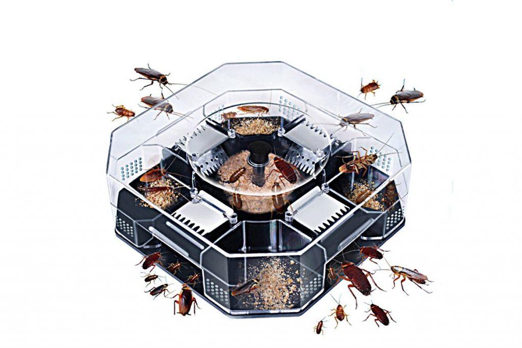 Летают ли тараканы или нет ловушки для тараканов