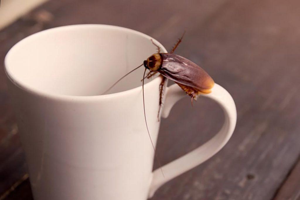 При какой температуре погибают тараканы и их яйца – методы воздействия низких и высоких температур для обработки зараженного помещения, комфортная температура