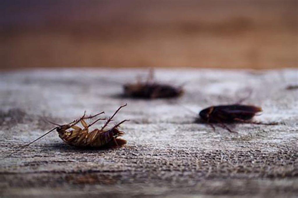При какой температуре погибают тараканы и их яйца – методы воздействия низких и высоких температур для обработки зараженного помещения, причины смерти при минусовой температуре