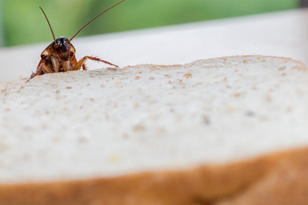 При какой температуре погибают тараканы и их яйца – методы воздействия низких и высоких температур для обработки зараженного помещения, доступ к пище