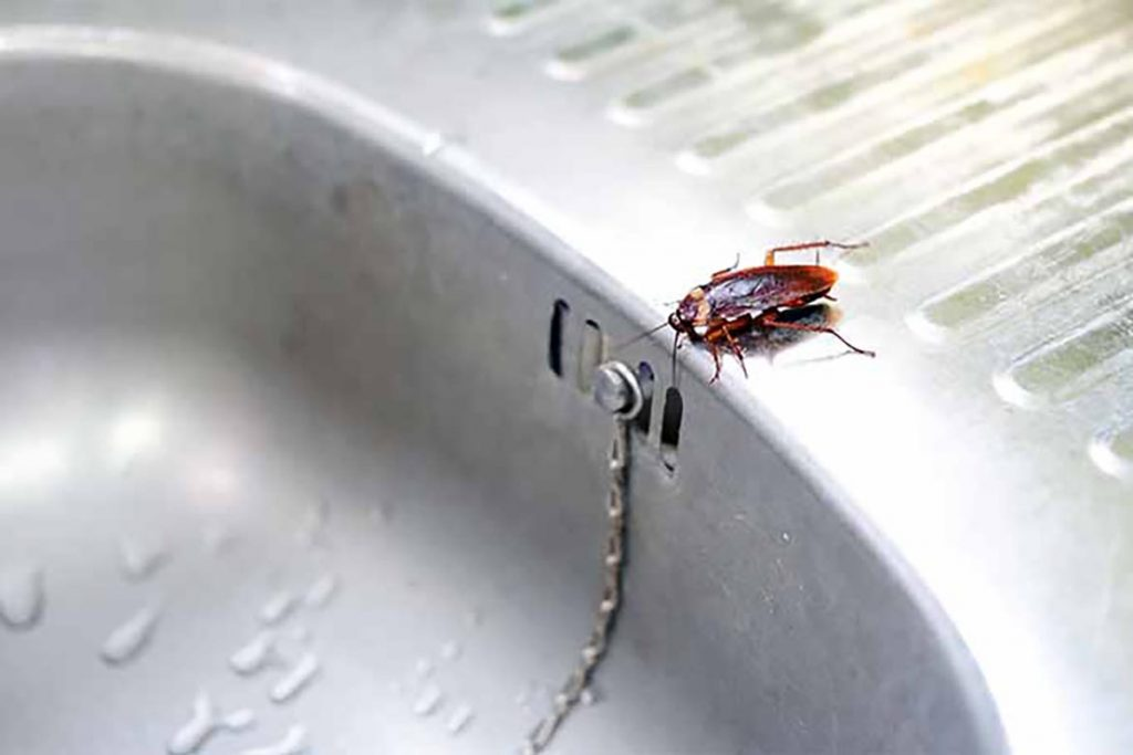 При какой температуре погибают тараканы и их яйца – методы воздействия низких и высоких температур для обработки зараженного помещения, влажность