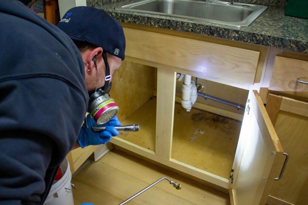 При какой температуре погибают тараканы и их яйца – методы воздействия низких и высоких температур для обработки зараженного помещения, кухня