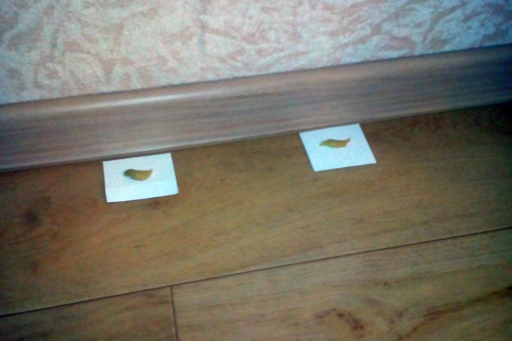 ТОП-5 лучших средств Медилис от тараканов и вредных насекомых, инструкция по применению геля