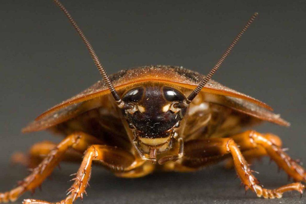 Тараканы на кухне – случайность или запущенность, что делать, если мелкие особи появились и бегают, как безопасно и эффективно избавиться от них, рыжий таракан