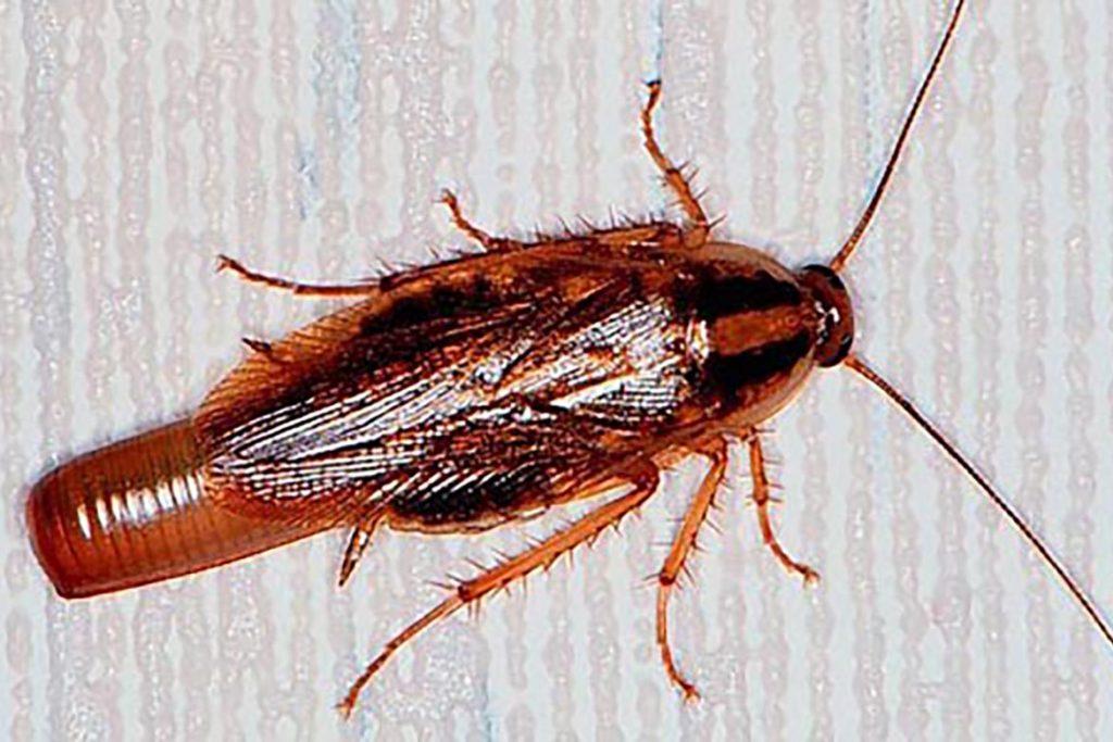 Тараканы на кухне – случайность или запущенность, что делать, если мелкие особи появились и бегают, как безопасно и эффективно избавиться от них, причины выживаемости