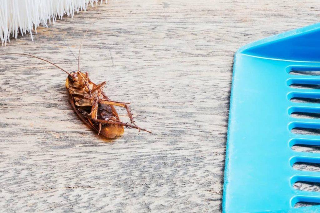 Тараканы на кухне – случайность или запущенность, что делать, если мелкие особи появились и бегают, как безопасно и эффективно избавиться от них, уборка после дезинсекции