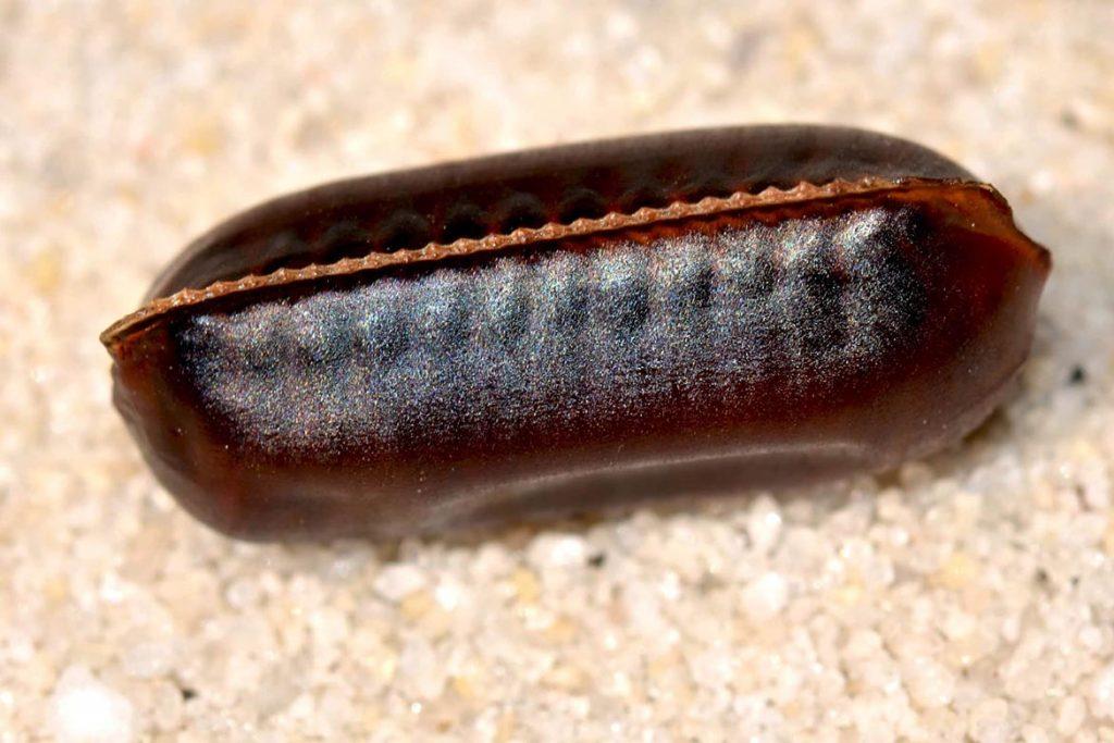 Тараканы на кухне – случайность или запущенность, что делать, если мелкие особи появились и бегают, как безопасно и эффективно избавиться от них, оотека