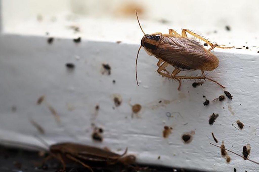 Тараканы от соседей – как заставить травить насекомых, куда жаловаться, образец заявлений. проникновение через окна