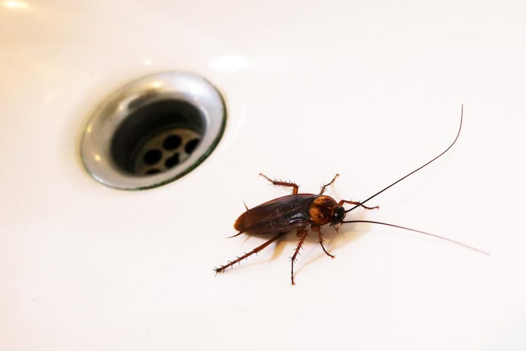 Тараканы от соседей – как заставить травить насекомых, куда жаловаться, образец заявлений, канализация