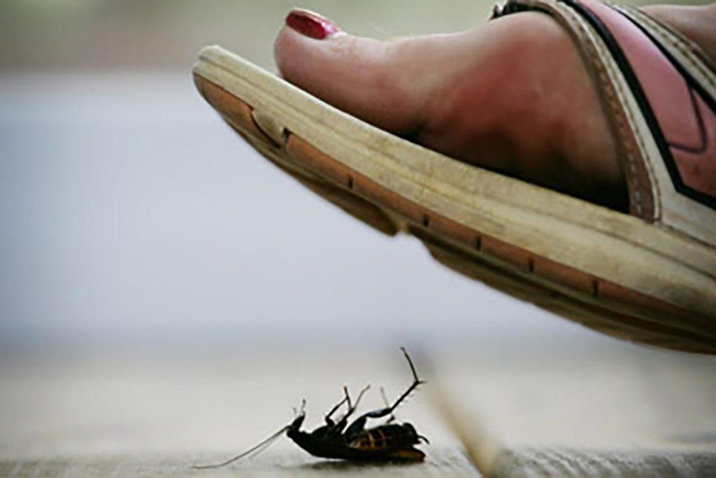 Тараканы после дезинсекции в квартире через сколько умирают, как себя ведут, через сколько исчезнут и почему стало больше, чем было. Этапы воздействия яда на насекомых, второй этап