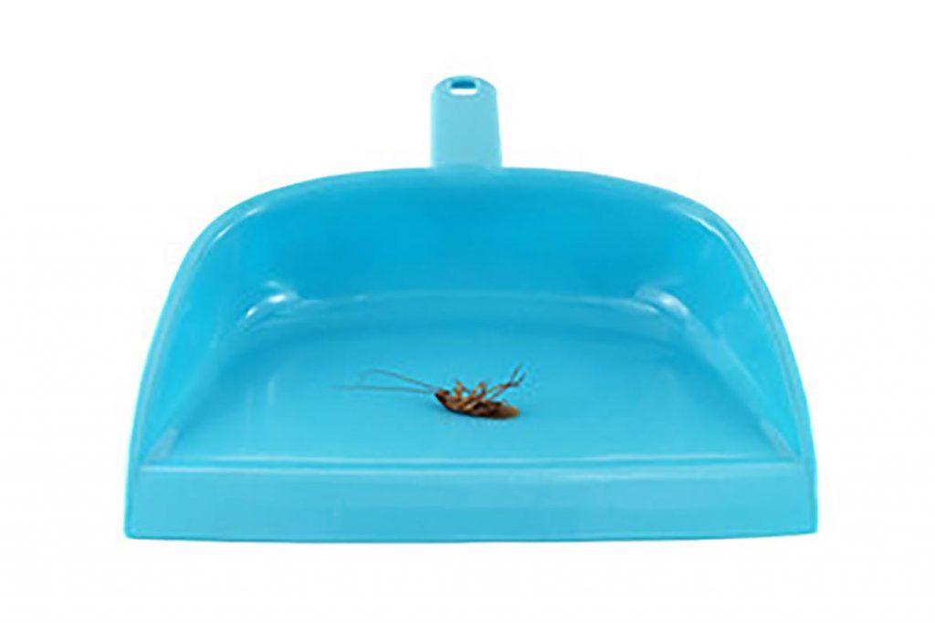 Тараканы после дезинсекции в квартире через сколько умирают, как себя ведут, через сколько исчезнут и почему стало больше, чем было. Этапы воздействия яда на насекомых, правила уборки