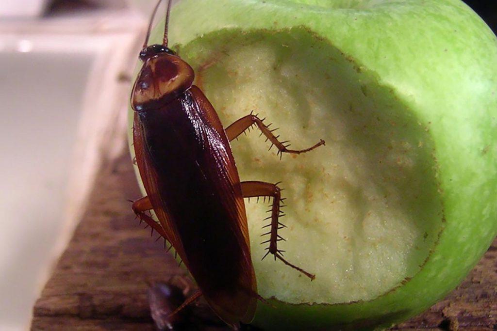 Тараканы в подъезде куда обращаться, что делать, на кого жаловаться. распространение инфекций