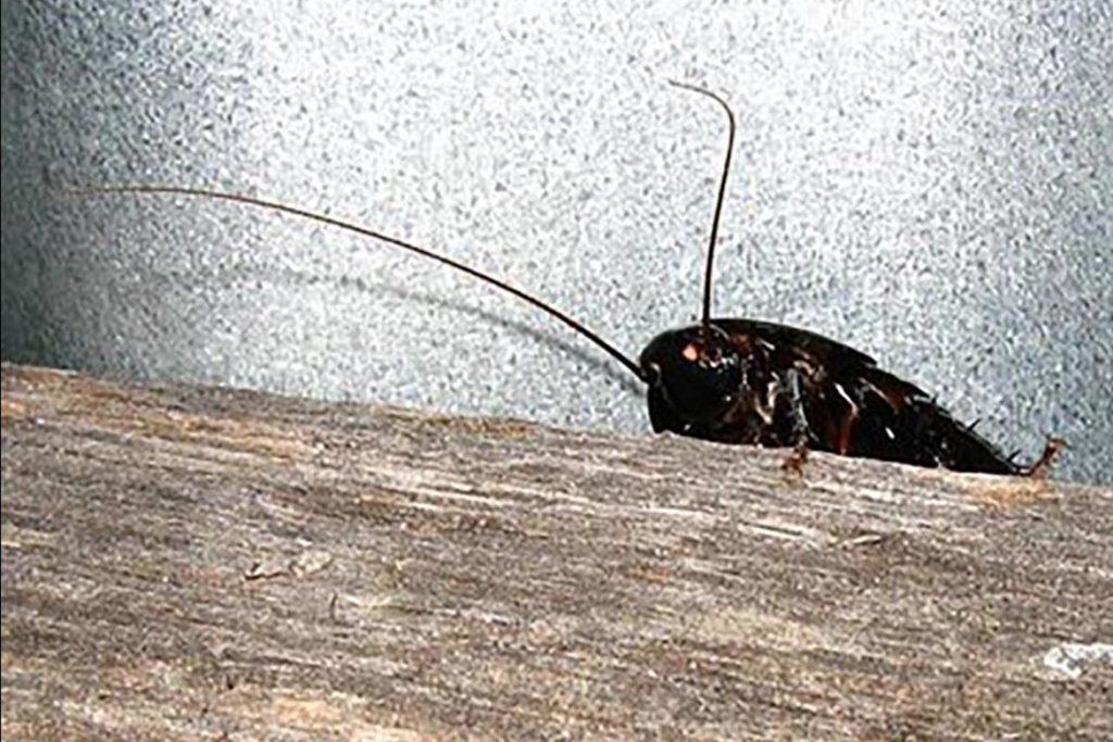 Тараканы в ванной комнате – откуда берутся, что делать и как эффективно избавиться от них, разведчик