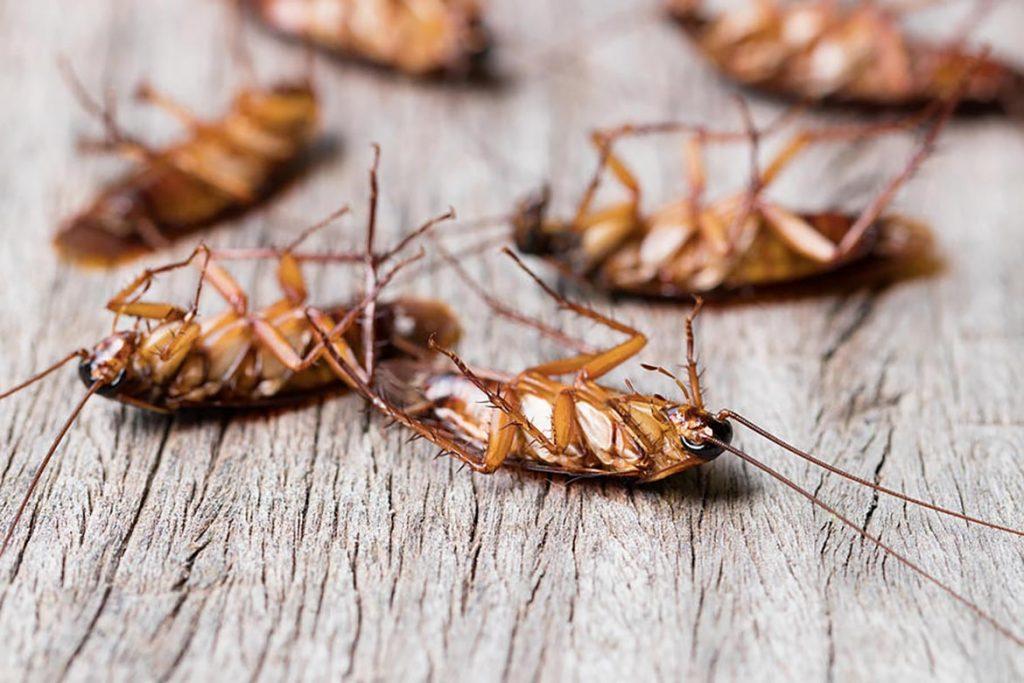 Уничтожение тараканов холодным туманом: преимущества и недостатки, чем лучше горячего тумана, отзывы о применении, эффективность