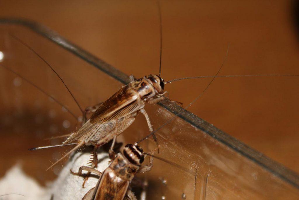 Уничтожение тараканов озоном с помощью озонатора: принцип действия, стоимость услуг и эффективность метода, отзывы об использовании, способ дезинсекции