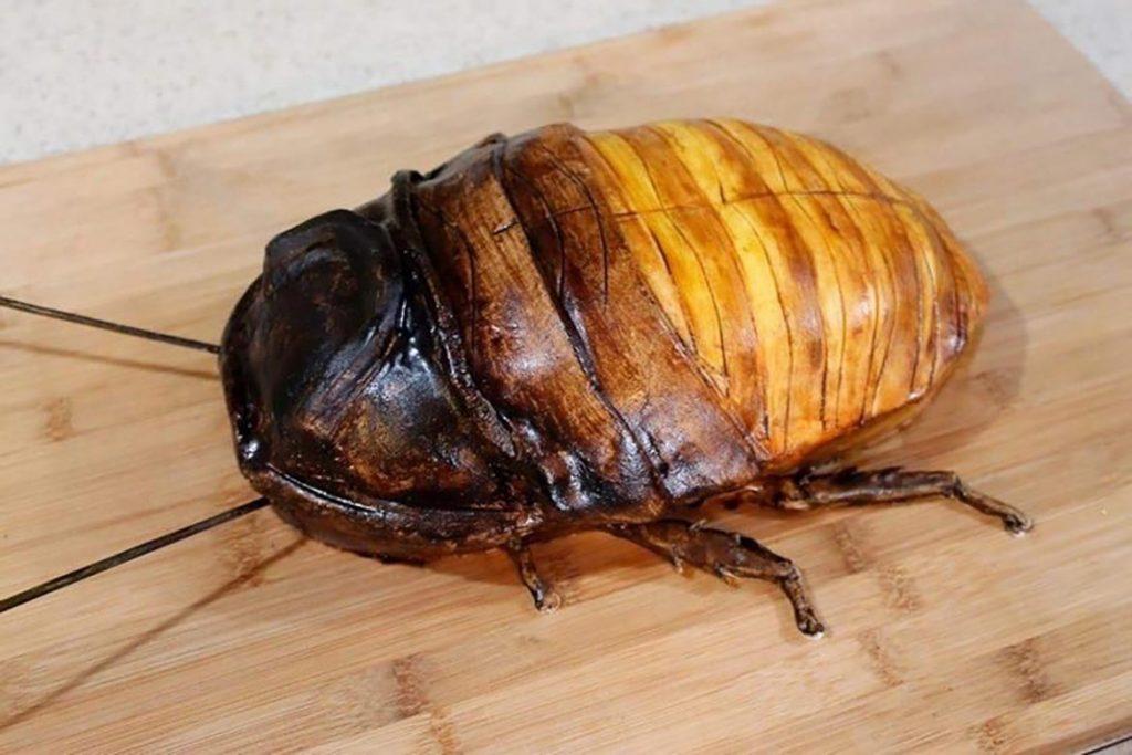Фото мадагаскарского шипящего таракана - фотографии, рисунки 04