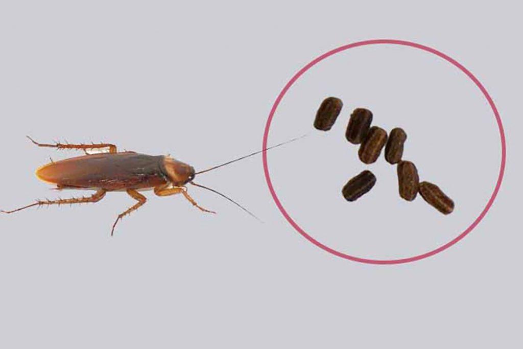 Карбофос от тараканов – как эффективно обработать квартиру, чтобы избавиться от вредителей, повторная обработка